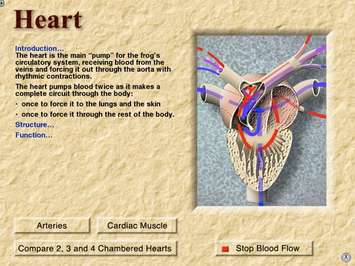 The heart from the anatomy section of The Digital Frog 2.5