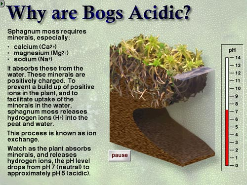 Bog acidity explained in text and animation