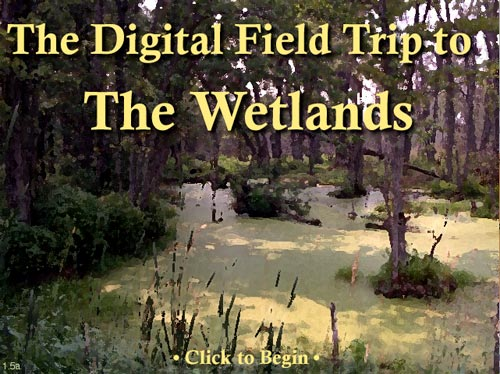The Digital Field Trip to The Wetlands