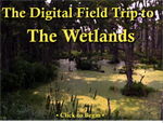 The Digital Field Trip to The Wetlands  - Annual Subscription (Educational)